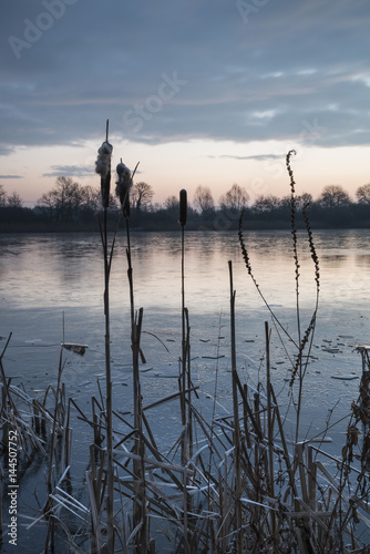 Stunning colorful Winter sunrise over reeds on lake in Cotswolds in England Poster