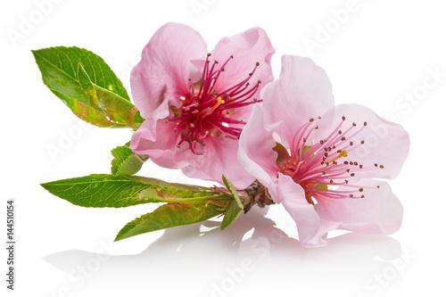 Almond flower Poster