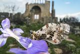 Butterfly and Okuzlu ruins from Mersin , Turkey