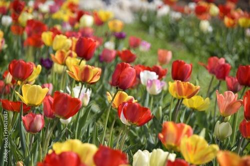 Fotobehang Tuin Wiese mit bunten Blumen