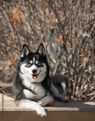 Poster Happy Dog Smiles At Camera With Branches Behind