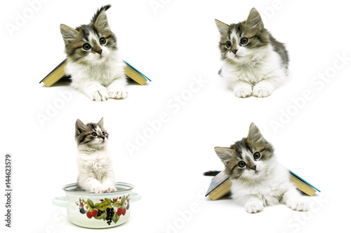 Poster beautiful fluffy kitten isolated on white background