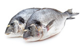 Fresh bream sea isolated on white background.