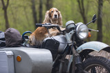 Dog and old Soviet motorcycle