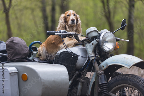 Foto op Canvas Scooter Dog and old Soviet motorcycle
