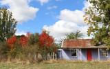 Australia in autumn with native trees - 144680527
