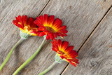 Three gerberas on the wooden background