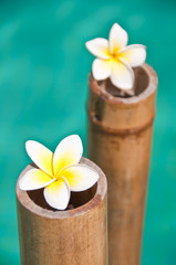 Plumeria flowers on bamboo trunks, blue water background
