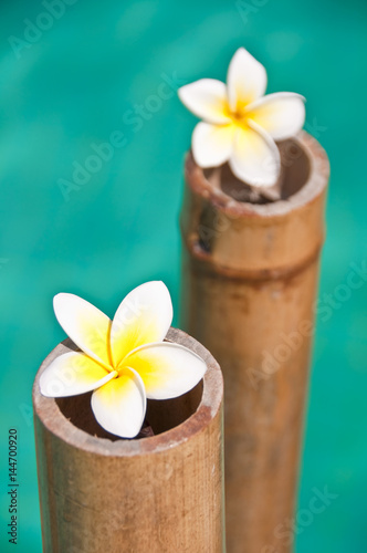 Papiers peints Zen Plumeria flowers on bamboo trunks, blue water background