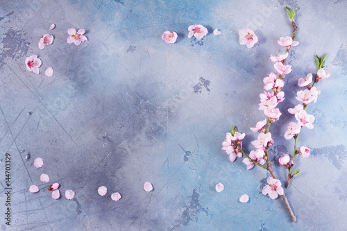 pink cherry blossom frame on gray and blue background Poster