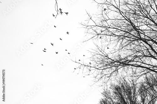 obraz PCV Himmel Bäume Vögel