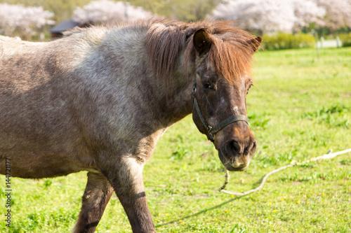 牧場の馬 Poster