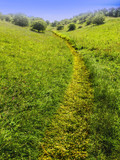 lush green typical generic beautiful english cotswold landscape