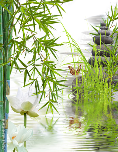composition aquatique zen