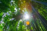Bamboo Grove Road