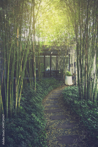 Path with bamboo garden