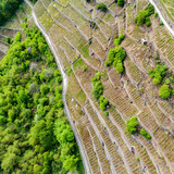 Valtellina (IT) - Vigneti in zona Chiuro Valgella - Vista aerea primaverile
