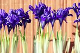 purple spring flowers irises