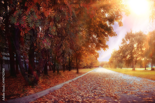 Papiers peints Marron blurred background path in autumn city park