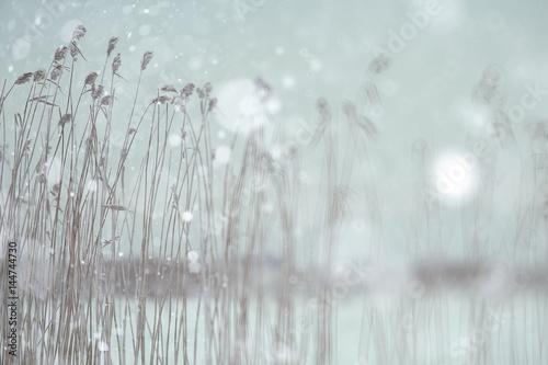 blurred background abstract winter snow landscape © kichigin19