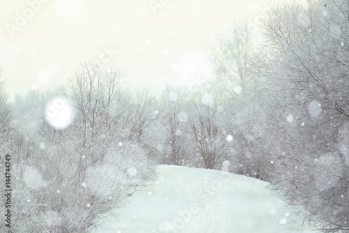 snowy winter landscape in the Christmas forest - 144744749