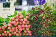 Bunches of fresh peony on flower market