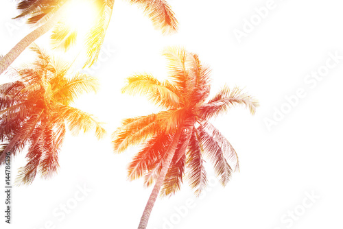 Fotobehang Purper Sun Palm Trees Sky Landscape Tropical Background