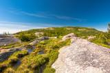 Rock Marsh