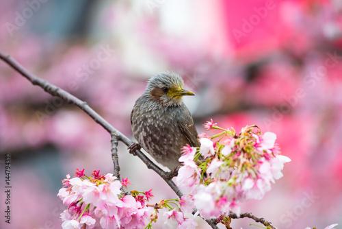 Poster A little bird perched on a flower, Sakura Pink.