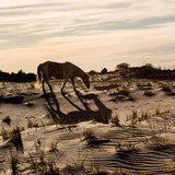 Wild horse on the beach.