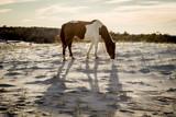 Wild horse on the beach.