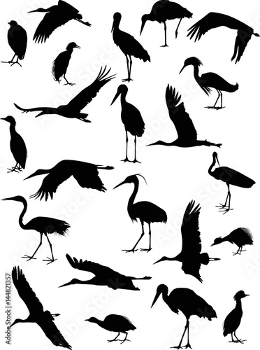 twenty two storks and herons isolated on white