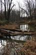 Beautiful forest landscape, fallen trees in the forest across the river