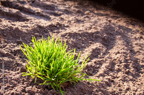 grünes Gras gegen gepflügtes Land