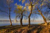 Trees on the river bank III