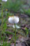 One Gentle Dandelion. Plants. Spring.