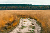 Sand path in field with tall yellow grass. Autumn forest on horizon.