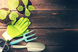 gardening tools and plants on old wooden background with copy space - 144865761
