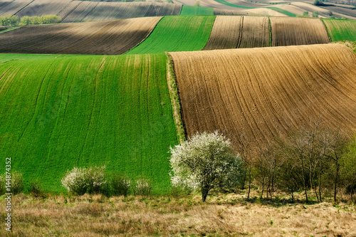 Fotobehang Groene Fields and agriculture, spring countryside, Ponidzie, Poland