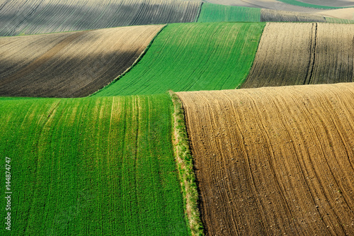 Aluminium Groene Fields and agriculture, spring countryside, Ponidzie, Poland