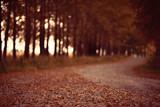background autumn forest landscape