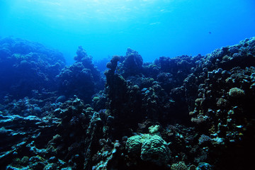 coral reef in the warm sea