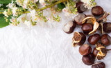 Chestnuts with tree blossom flowers on white - 144904761