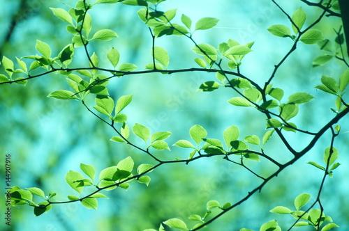 Staande foto Groene koraal 新緑 若葉