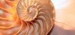 nautilus shell Fibonacci symmetry cross section spiral structure growth golden ratio pearl