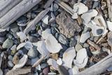 Rocks, wood and shells