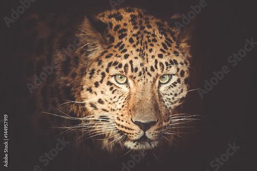 Foto op Plexiglas Panter leopard