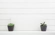 Weiße Holz Wand als Hintergrund mit Zimmerpflanzen als Dekoration für Werbekonzepte