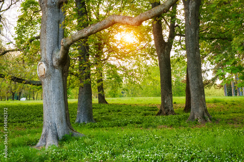 Sunlight in the green forest springtime