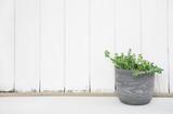 Holz Bretter Wand in weiß mit Pflanze im Topf als dekorativer Hintergrund mit grün